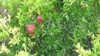 Sad owocowy